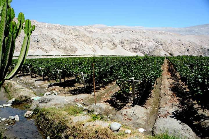 Perú a través del pisco Foto Sommelier