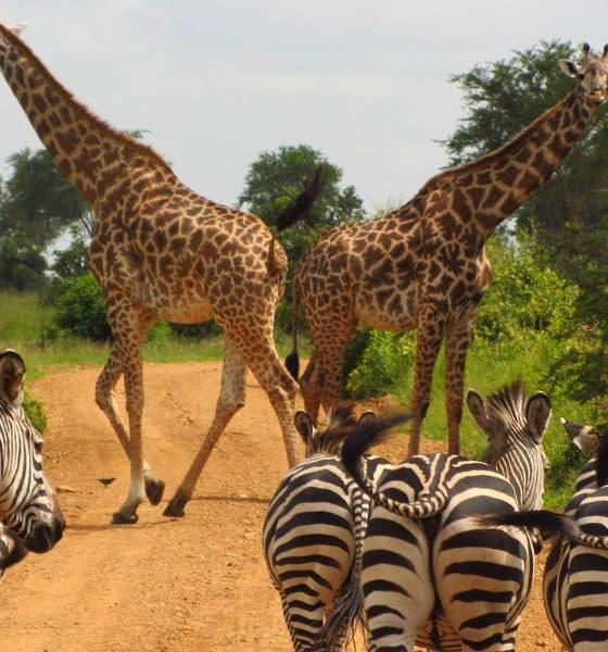 Guía para viajar a Tanzania Foto. Pixabay