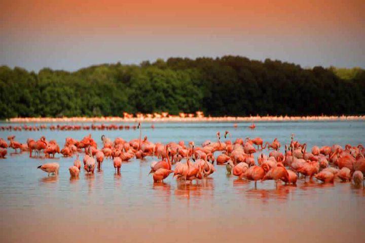 Turiméxico Foto: Celestún Yucatán