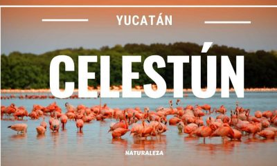 Celustún Yucatán Foto. Youtube