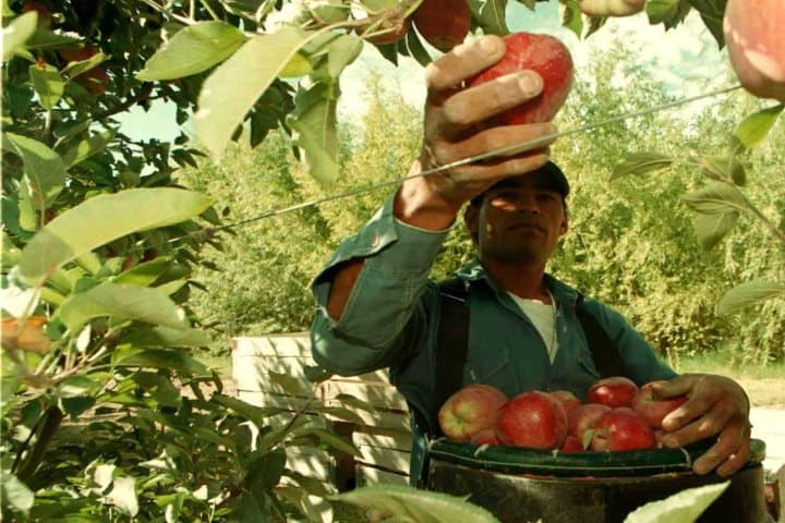 manzanaproduccion