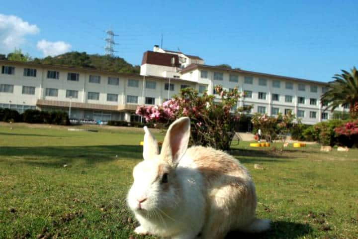 Okunoshima la isla de los conejos. Foto Kyukumara Ohkunoshima