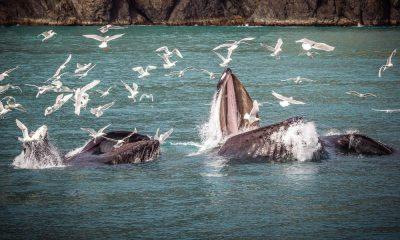 Avistamiento de ballenas en Ensenada Foto: Pixabay