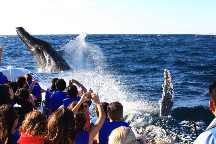 Qué hacer durante la temporada de ballenas.. Foto: Flickr