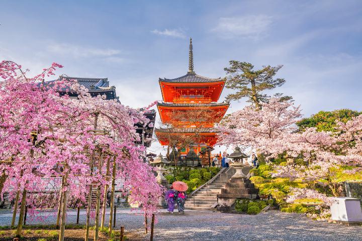 Tips para viajar a los juegos olímpicos de Tokio. Foto Lê Tuấn Hùng
