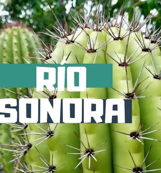 Ruta del Río Sonora (2) Foto:Youtube