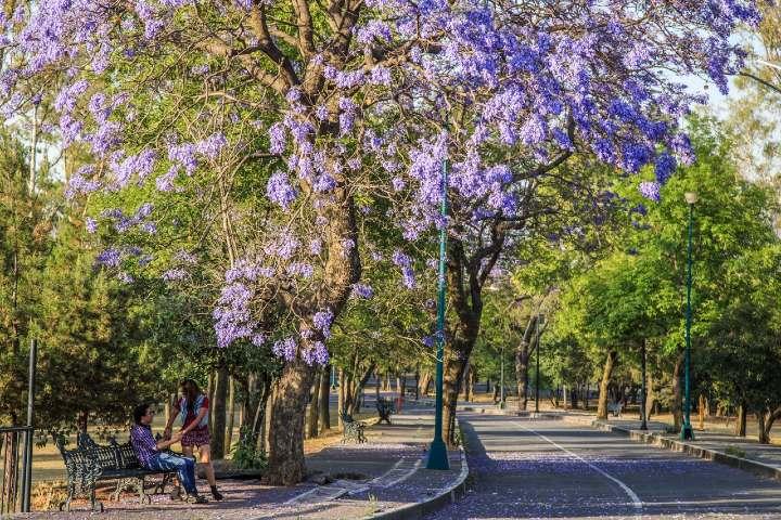Acarameladas maneras de vivir CDMX en pareja. Foto_ Bosque de Chapultepec
