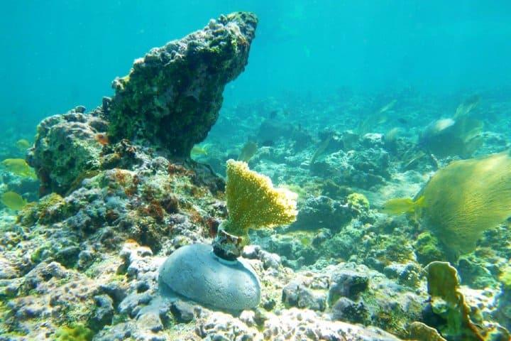 Arrecifes. Fairmont Mayakoba, Riviera Maya.