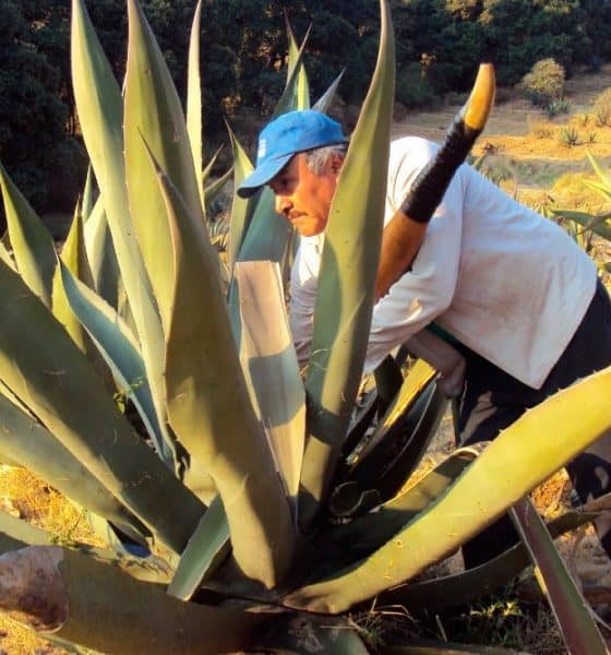 Fiestas y clima de Tlaxco. Foto:Gobierno de México