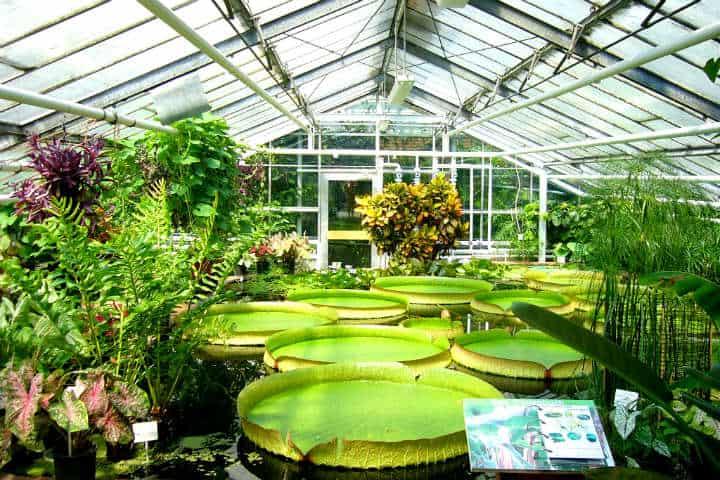 Jardines botánicos Foto Decoración y jardínes
