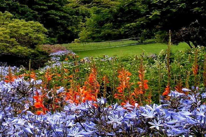 Jardines botánicos Foto Paisajismo digital