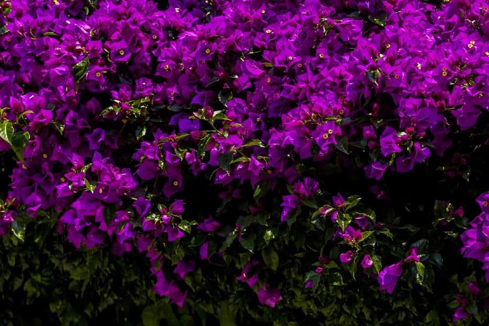 Primavera en México. Foto: Pixabay