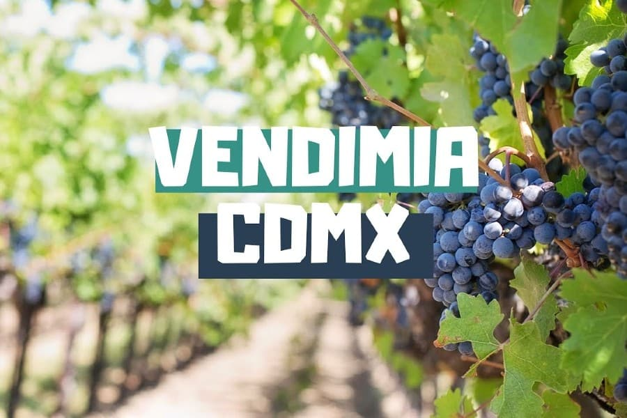 Vendimia más cercana a CDMX. Foto: Youtube