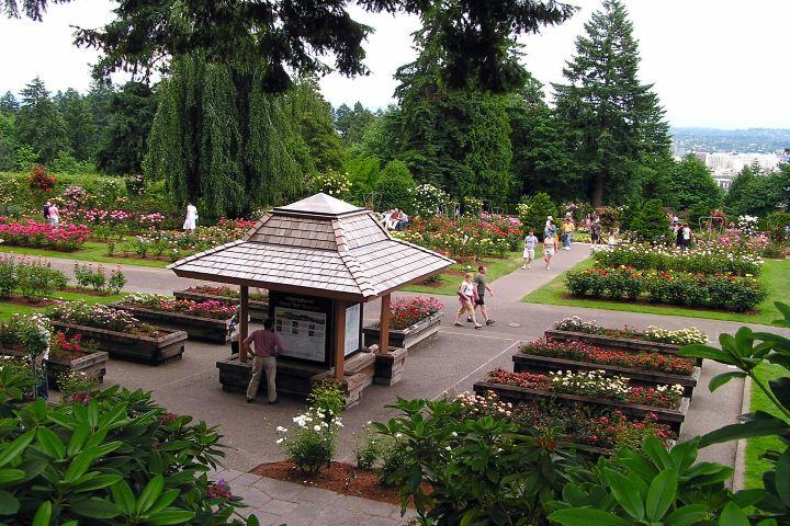 OPB Foto: Portland ciudad de rosas