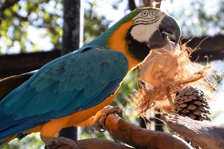 Aves Foto: RioZoo