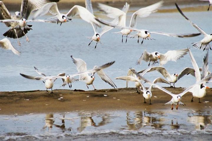 El SudCaliforniano Foto: Aves en Baja California Sur
