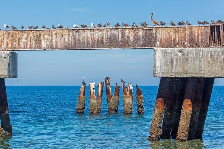 Aves en Isla Magdalena Foto: Bruce Fyxell