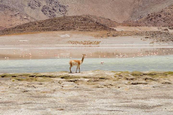 Laguna Blanca Foto: Heart of Argentina Travel