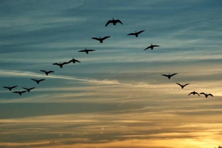 Tribuna de Salamanca Foto: Aves en Baja California
