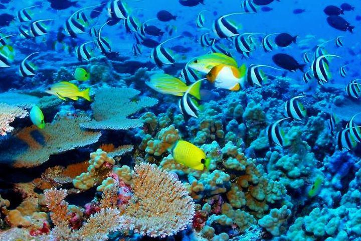 Barrera Coral Australia. Foto. Bioguía