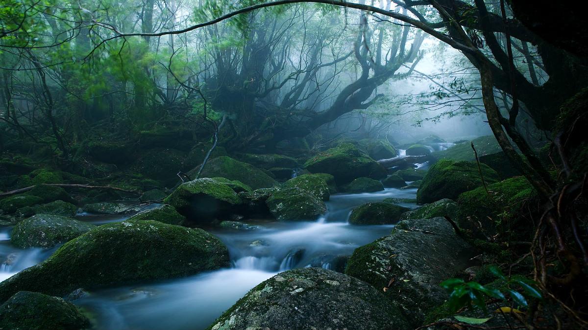 Bosque Mononoke. Foto Casey Yee