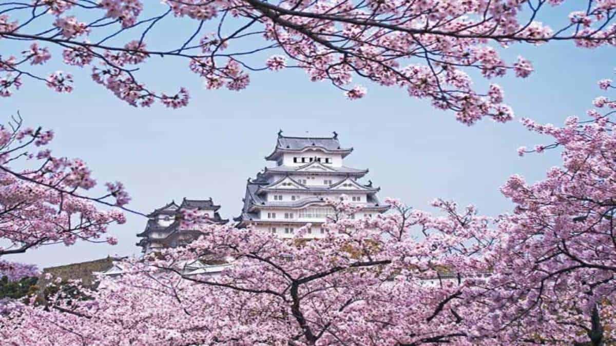 Cerezos_en_Japon_3