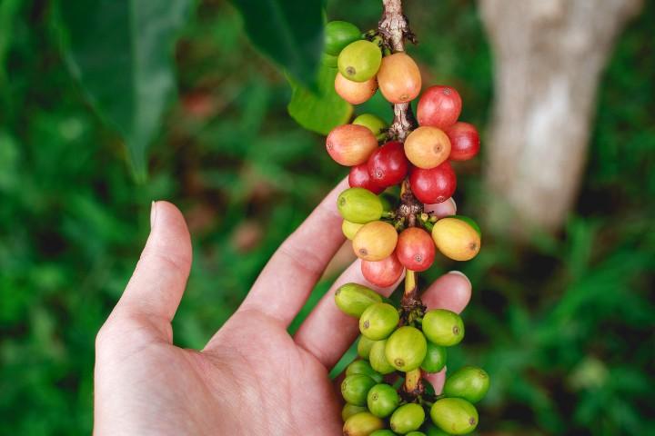 Cooperativa de café en Totonacapan.
