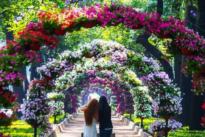 Festival Flores y jardines. Foto. Gaby Castillo