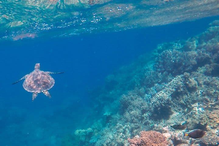 Gran Barrera de Coral Foto: Ruben Garrido López