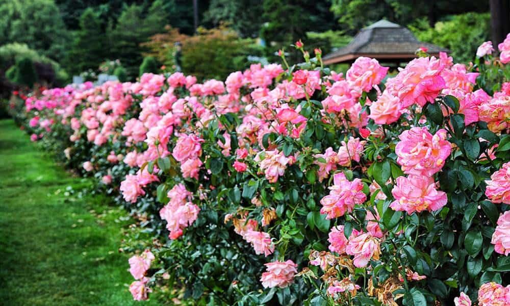 Jardín japonés de Portland Foto: Scott & Eric Brendel
