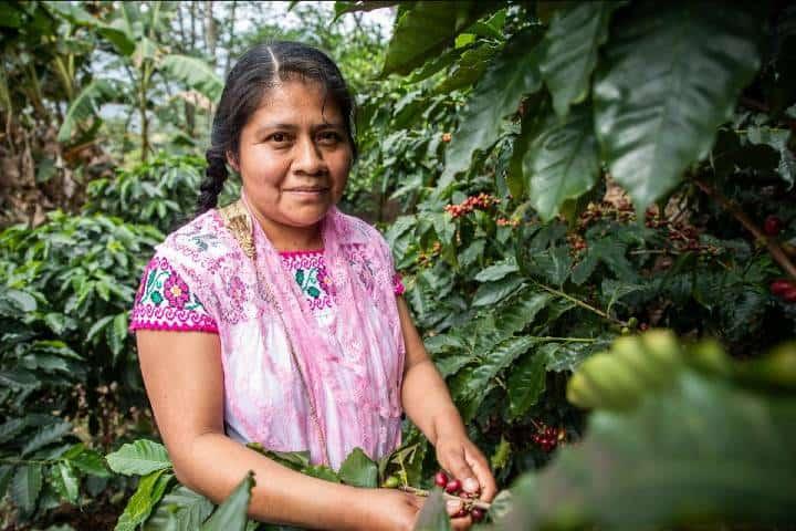 Cooperativa de café en Totonacapan. Mujeres y café Foto Archivo