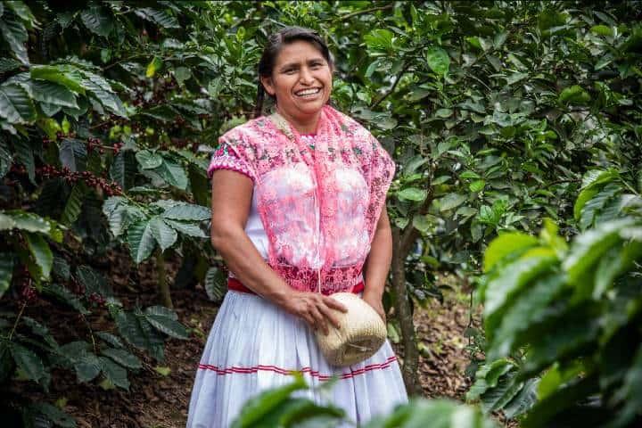 Cooperativa de café en Totonacapan. Mujeres y el café Foto Archivo