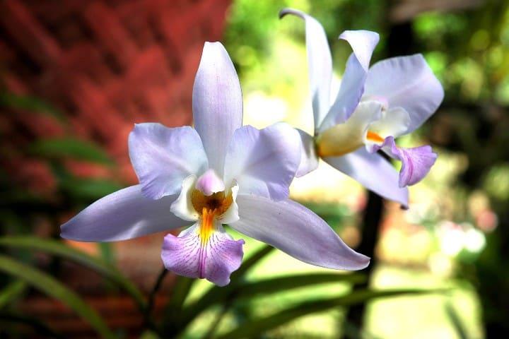 Orquídeas Foto: Jorge Morales