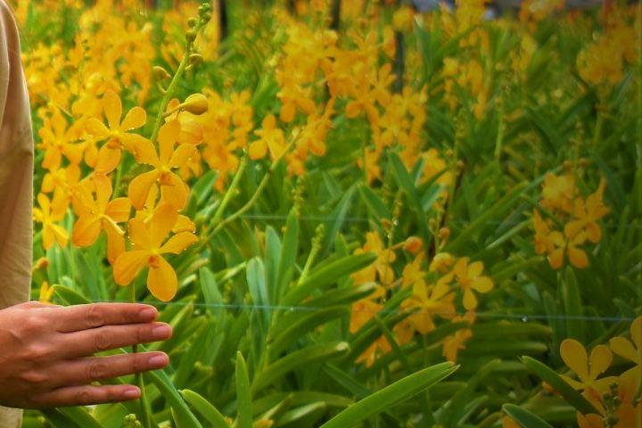 Orquiderario de Colima. Foto: Viveplants