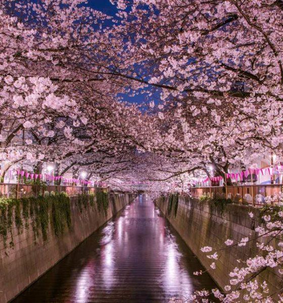 Primavera en Japón. Foto: Travel Times