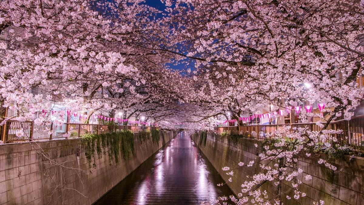 Primavera en Japón. Foto Travel Times
