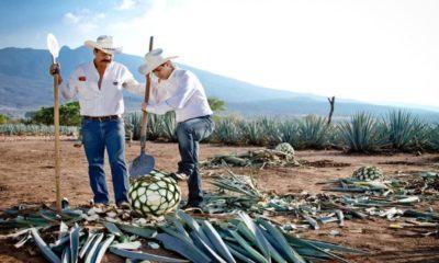 Proceso del tequila. Foto: Archivo