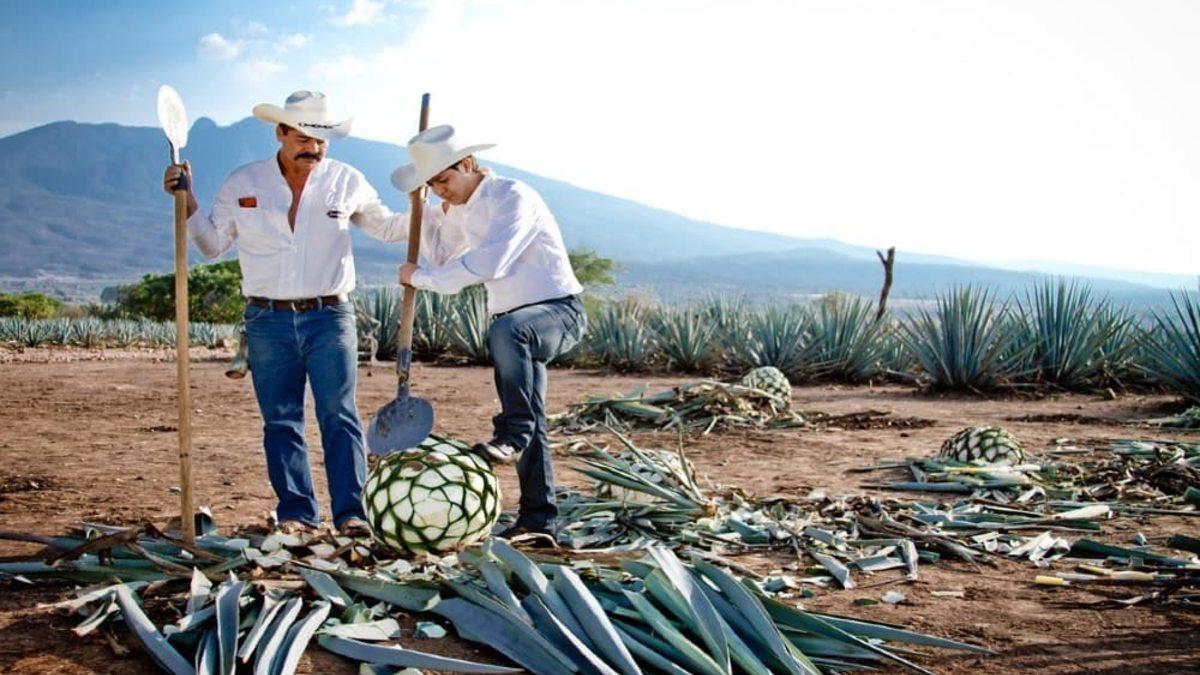 Procesó del tequila Foto: Archivó