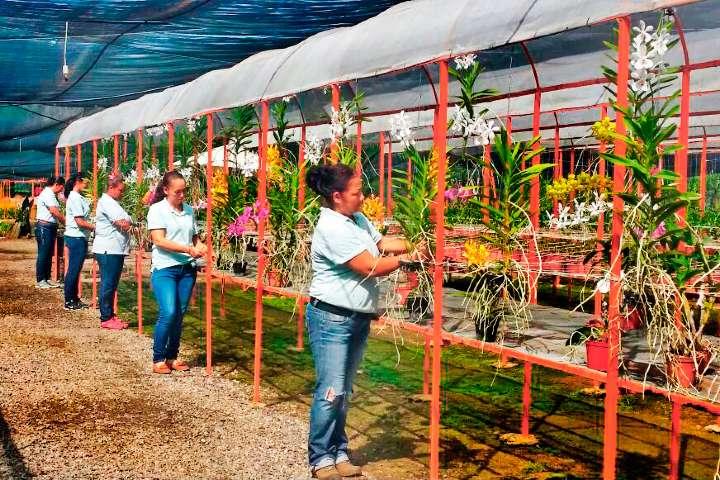 Producción de orquídeas Foto: Viveplants