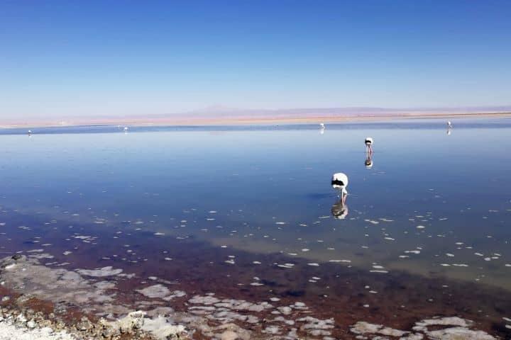 Qué hacer en el desierto de Atacama Foto Julio García Castillo (7)