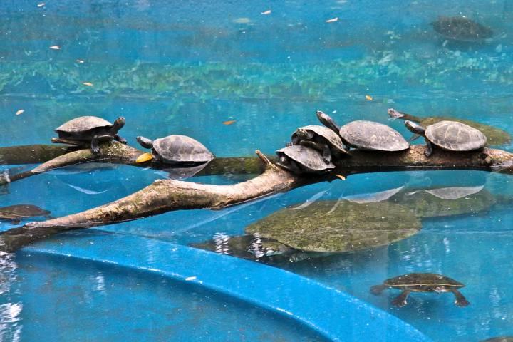 Tortugas en Río de Janeiro Zoo Foto: alobos life