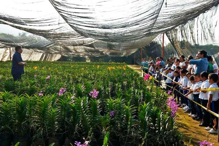 Tour de orquídeas Foto: Vivaplants