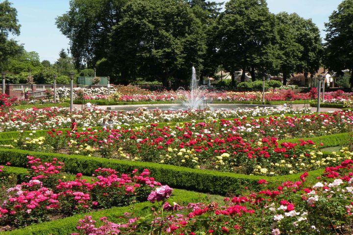 Pinterest Foto: Ciudad de Rosas
