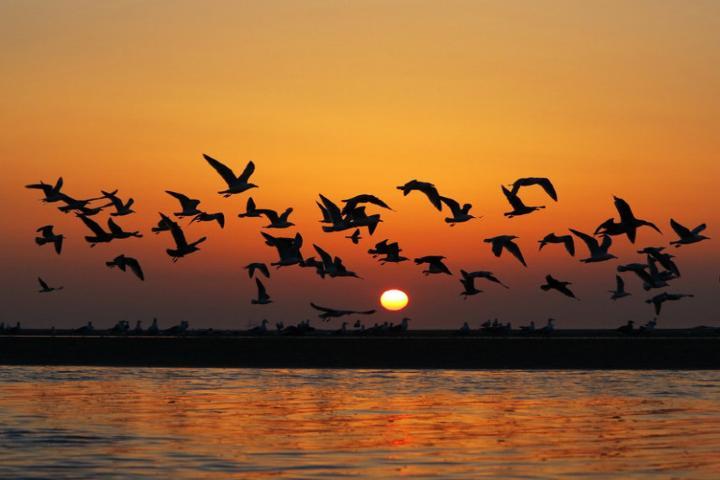 Bandada de Letras Foto: Aves de Baja California