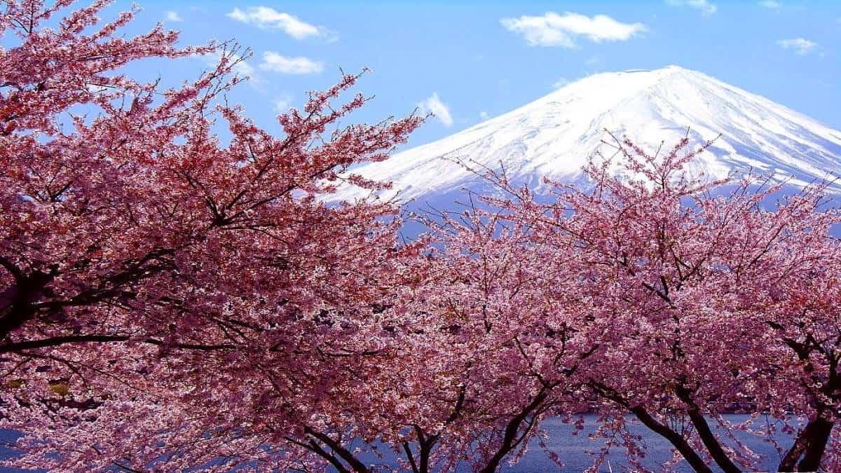 nihon no primavera