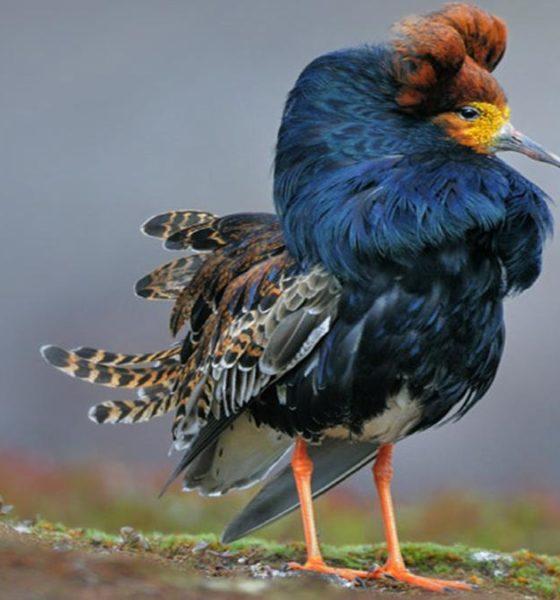 Picasa Foto: Aves en Baja California