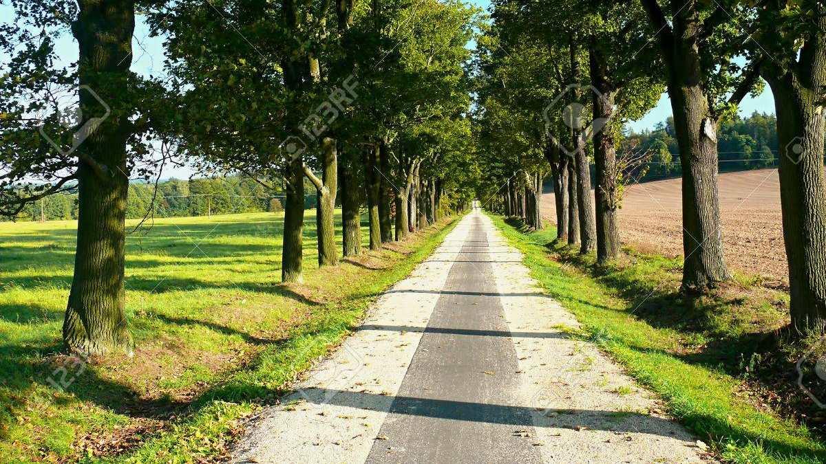 10788794-avenida-de-árboles-con-la-bici
