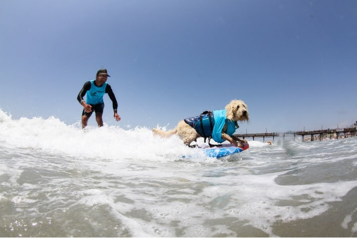 Actividades pet friendly en San Diego Foto_Unleashed