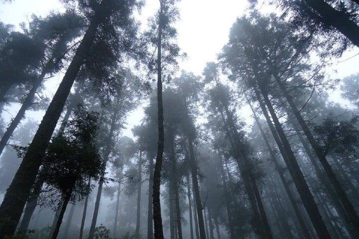 Bosques de Uruapan, sede de la leyenda de la Cañada de las Vírgenes Foto Berma Ferra