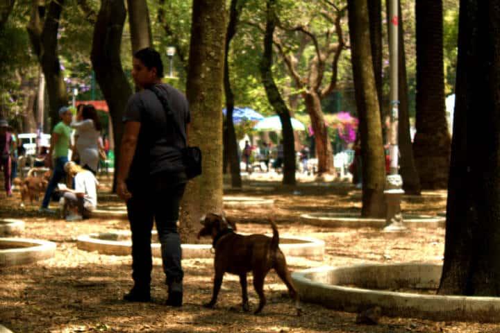 Perro y su dueño en uno de los 5 lugares para disfrutar la CDMX con tu perro Foto María Fernanda Alvarado Badillo